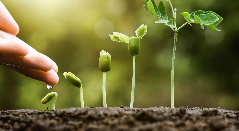 Bilde av grønne planter som vokser