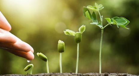 En grønn plante som spirer og gror