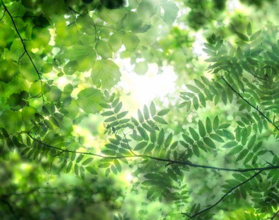 Grønne blader med sollys