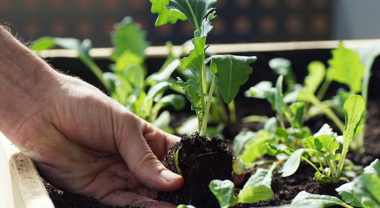 Planter som vokser