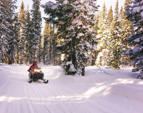 Bilde av snøscooter som kjører gjennom skogen.
